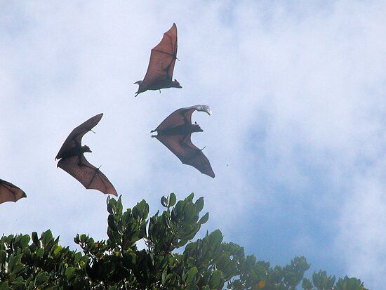 'Batty' by Veronicar
