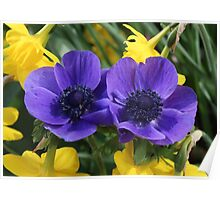 Anemone & Jonquils Poster