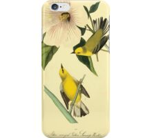 James Audubon Vector Rebuild - The Birds of America - From Drawings Made in the United States and Their Territories V 1-7 1840 - Blue Winged Yellow Swamp Warbler iPhone Case/Skin