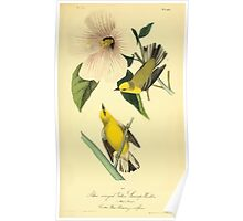James Audubon Vector Rebuild - The Birds of America - From Drawings Made in the United States and Their Territories V 1-7 1840 - Blue Winged Yellow Swamp Warbler Poster