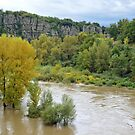 Trees in the river Ardeche by Arie Koene