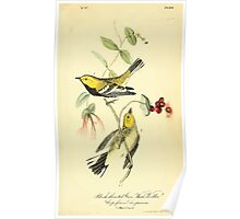 James Audubon Vector Rebuild - The Birds of America - From Drawings Made in the United States and Their Territories V 1-7 1840 - Black Throated Green Wood warbler Poster