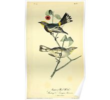 James Audubon Vector Rebuild - The Birds of America - From Drawings Made in the United States and Their Territories V 1-7 1840 - Audubon's Wood Warbler Poster