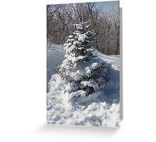 tree w/ snow Greeting Card