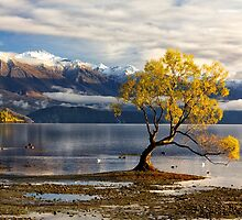 Wanaka Lake Tree 4 by Charles Kosina