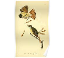 James Audubon Vector Rebuild - The Birds of America - From Drawings Made in the United States and Their Territories V 1-7 1840 - Great Crested Flycatcher Poster