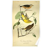 James Audubon Vector Rebuild - The Birds of America - From Drawings Made in the United States and Their Territories V 1-7 1840 - Yellow Red-Poll Wood Warbler Poster