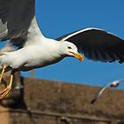 In flight by Peter Hammer