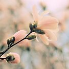 Pastel Petals by Jessica Jenney
