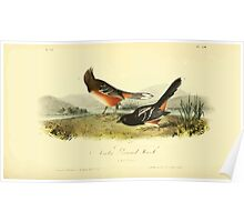 James Audubon Vector Rebuild - The Birds of America - From Drawings Made in the United States and Their Territories V 1-7 1840 - Arctic Ground Finch Poster