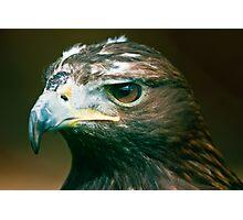 Golden Eagle (lat. Aquila chrysaetos) Photographic Print