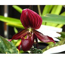 VooDoo Magic Orchid Photographic Print