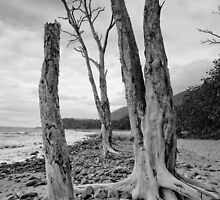 Beach Erosion in Black & White by RustyL