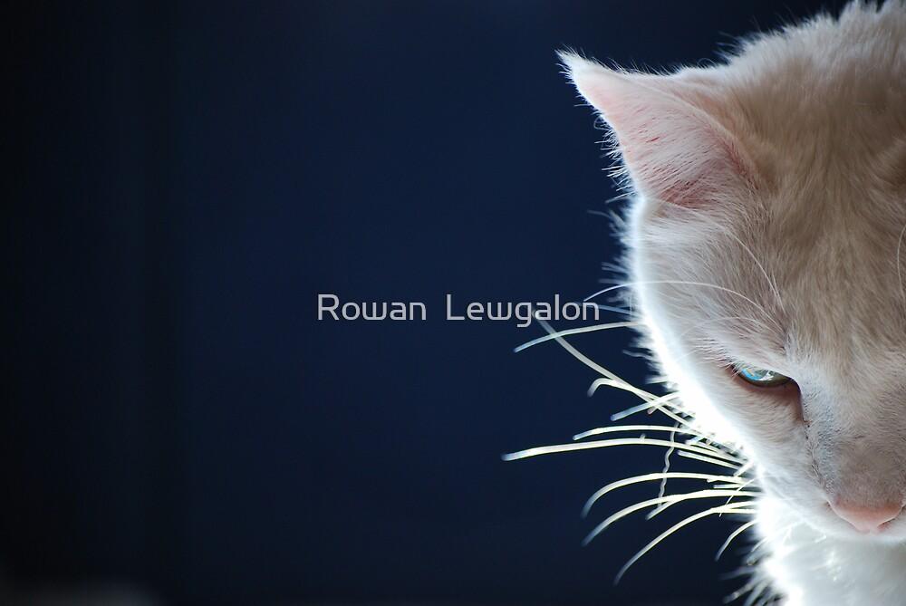 Seeking Light by Rowan  Lewgalon
