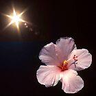 Sunburst o'er Hibiscus by Roger Otto