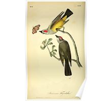 James Audubon Vector Rebuild - The Birds of America - From Drawings Made in the United States and Their Territories V 1-7 1840 - Arkansaw Flycatcher Poster