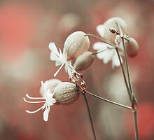 Bells by Lidija Lolic