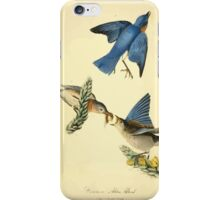 James Audubon Vector Rebuild - The Birds of America - From Drawings Made in the United States and Their Territories V 1-7 1840 - Common Blue Bird iPhone Case/Skin