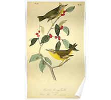 James Audubon Vector Rebuild - The Birds of America - From Drawings Made in the United States and Their Territories V 1-7 1840 - Nashville Swamp Warbler Poster