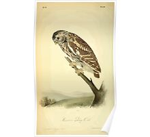 James Audubon Vector Rebuild - The Birds of America - From Drawings Made in the United States and Their Territories V 1-7 1840 - Passerine Day Owl Poster