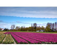 ...Tulip time in Holland : Spring.. Photographic Print