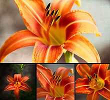 Tiger Lily Collage by designingjudy