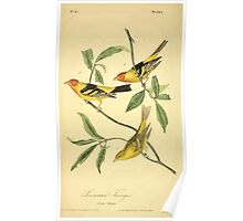 James Audubon Vector Rebuild - The Birds of America - From Drawings Made in the United States and Their Territories V 1-7 1840 - Louisiana Tanager Poster