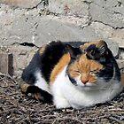Stray Cat by Kallian