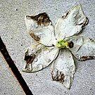 White Flower by mrfriendly