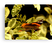 Flitting About - Red Admiral Butterfly Canvas Print