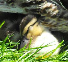 Snuggle Into Mom....zzzz.... by Tracy Wazny