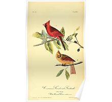 James Audubon Vector Rebuild - The Birds of America - From Drawings Made in the United States and Their Territories V 1-7 1840 - Common Cardinal Grosbeak Poster