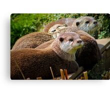 Family of otters........ Canvas Print