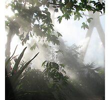 Denver Botanic Garden Conservatory Photographic Print