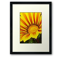 Orange and Rust Color Gazania Montezuma Macro Framed Print