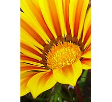 Orange and Rust Color Gazania Montezuma Macro Photographic Print