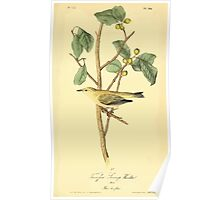 James Audubon Vector Rebuild - The Birds of America - From Drawings Made in the United States and Their Territories V 1-7 1840 - Tennesee Swamp Warbler Poster