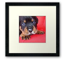 That Meal Was Rott'n Framed Print
