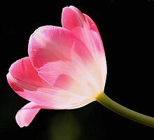 Pink Delight by Jo Nijenhuis