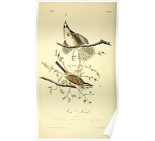 James Audubon Vector Rebuild - The Birds of America - From Drawings Made in the United States and Their Territories V 1-7 1840 - Song Finch Poster