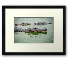 Alligators Framed Print