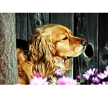 Stop and Smell the Flowers! Photographic Print