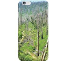Stevenson's Falls, Marysville, Victoria, Australia, After the Fires iPhone Case/Skin