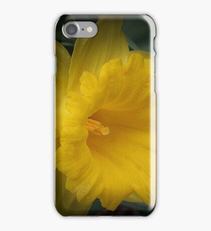 Spotlight on a Daffodil iPhone Case/Skin