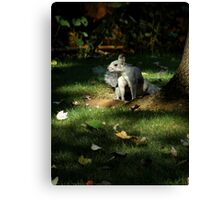 """""""Nature's Spotlight""""  Evening Light and a Playful Squirrel Canvas Print"""
