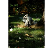 """Nature's Spotlight""  Evening Light and a Playful Squirrel Photographic Print"