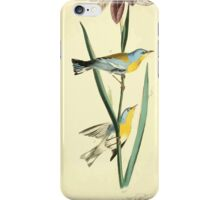 James Audubon Vector Rebuild - The Birds of America - From Drawings Made in the United States and Their Territories V 1-7 1840 - Blue Yellow Backed Wood Warbler iPhone Case/Skin