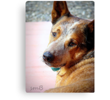 Murphy ~The Cow Dog Canvas Print
