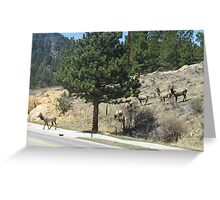 Why did the Elk cross the road... Greeting Card