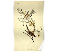 James Audubon Vector Rebuild - The Birds of America - From Drawings Made in the United States and Their Territories V 1-7 1840 - Canada Bunting or Tree Sparrow Poster